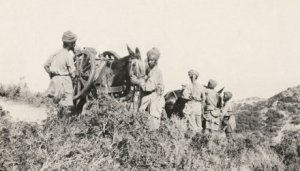 Troops from the Indian Mule Corp at Gallipoli (Image: Australian War Memorial)